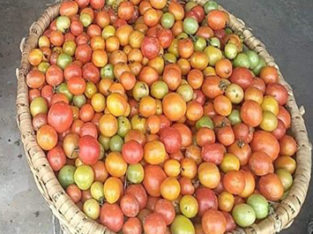 Tomatoes on Sale, Best Vegetables Farming of Nepal